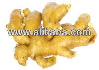 fresh garlic in cold storage specification