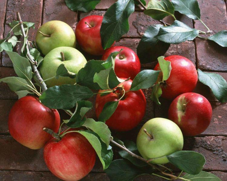 Fresh Apple Turkish Red Delicious Apple Starking Delicious Apple Golden Delicious Apple