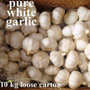 2013 china pure white garlic 10kg carton
