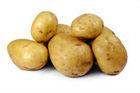 Fresh potatoes 2013