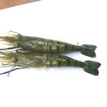 Entero de agua dulce gambas / camarones / Scampi ( Macrobrachium Rosenbergii )