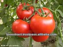 Tomato Extract 1-10% Lycopene