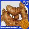 best price curcuma longa root extract with 95% curcumin
