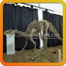 Life-Size Animals Skeleton Prehistoric Dinosaur Skeleton