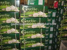 2013 red garlic