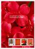 Herb Medicine,Organic Safflower Extract,Total Isoflavones 2.0%