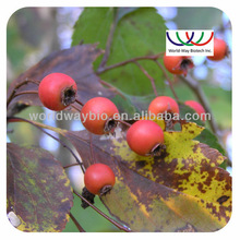 Supplier manufacturer Top quality Hawthorn berry Extract P.E 10:1