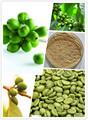 Original feijão de café verde arábica de capital chinesa de chá