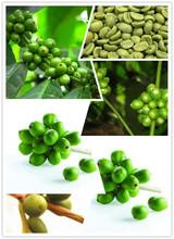 High quality arabica typica green coffee beans