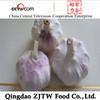 China Jinxiang Hybrid Garlic