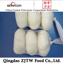 Supply Best China bulk pickled Garlic