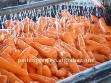 fresh carrots new vegetable