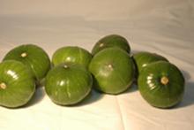 Plantio híbridos squash vegetal sementes jade verde