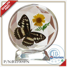 FOUSEN dried and real butterfly wholesale taxidermy