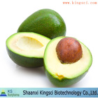 GMP standard High Quality avocado wholesale price