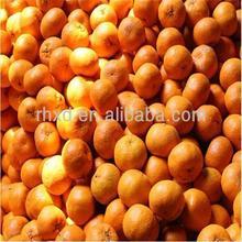 Chinese fresh citrus fruit honey mandarin orange exporter