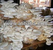 Organic Mushroom (Ganoderma, Oyster) Fresh/Dried