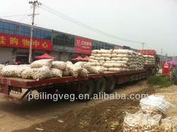 fresh garlic for sale (shouguang factory)
