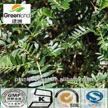 tribulus terrestris extract total saponins 40%