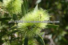 Tea Tree Oil Australia
