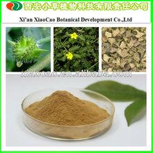 Supply Tribulus Powder/Tribulus Terrestris Extract Total Saponins 80%
