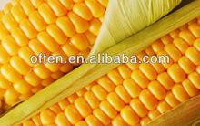 Yellow Corn With Best Price