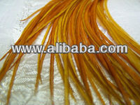 Long Glowing Gold Rooster Feathers