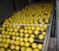 Citrus Fresh Lemon