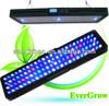 CE Rohs Programmable Sunrise Sunset Moonlight Remote Control EverGrow Facory it2080 led aquarium light dimmable full spectrum