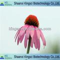 O mais favorável para 100% natural echinacea sementes