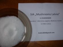 Sell beet sugar with EU origin