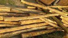 Acacia logs from Tan Ha Co., Ltd Vietnam origin