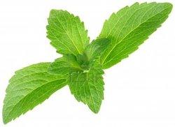 Organic Dried Stevia Leaves