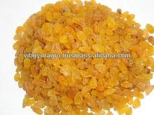 Golden Raisin Long Sangli for United Arab Emirates