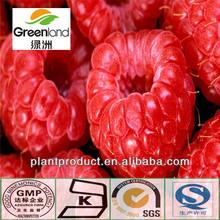 China Plant extract Raspberry P.E.