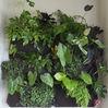 Gardener's Supplier Living Wall Vertical Gardening Green Wall Planters
