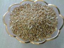 Wheat Pakistan Origin