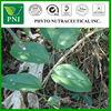 Sarsaparilla officinalis Root extract