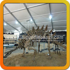 Excavation Skeleton Stegosaurus Dinosaur Fossils For Sale