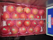 Qinguan Apple new crop 9kg 28/32/26/40#
