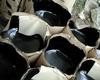 oxidized bitumen 115/15 95/25 75/25 85/25 90/40 150/5 90/15