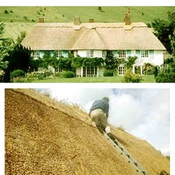 Thatched Roof Materials Water Reed Price in Thoothukudi