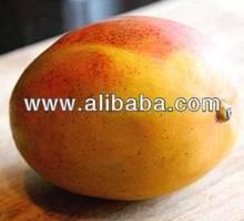 Fresh Mango for sale
