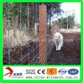 recinto elettrico per i bovini