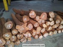 Fiji Sandalwood