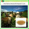 Manufacturer Supply Green Tea Leaf Extract Tea Polyphenols/EGCG