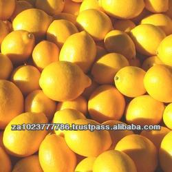 Fresh Citrus Fruits, Valencia Oranges & Lemons