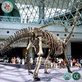 musuem Fossil