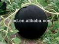 híbrido de siembra f1 negro corteza de semilla de sandía