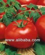 Fresh Beef Tomato
